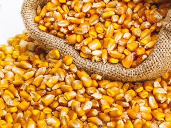Conab contrata frete para remoção de 8,4 mil t de milho para o Norte e Nordeste