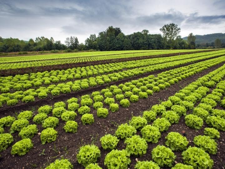 Horticultura é destaque na Agrishow 2019
