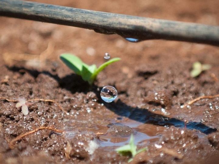 Com irrigação por gotejo, Braskem e NaanDanJain geram aumento acima de 65% na produção de cana