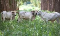 ILPF desponta como nova revolução agrícola dos trópicos e se intensifica no Brasil