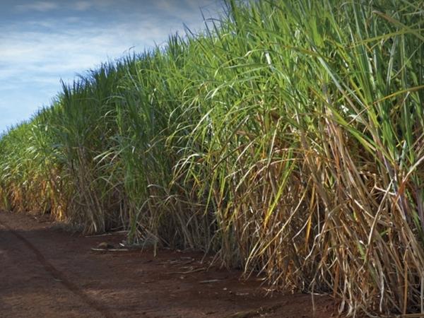 Muneo BioKit® une solução química e biológica para aumentar a produtividade e a longevidade do cultivo. Foto: Divulgação