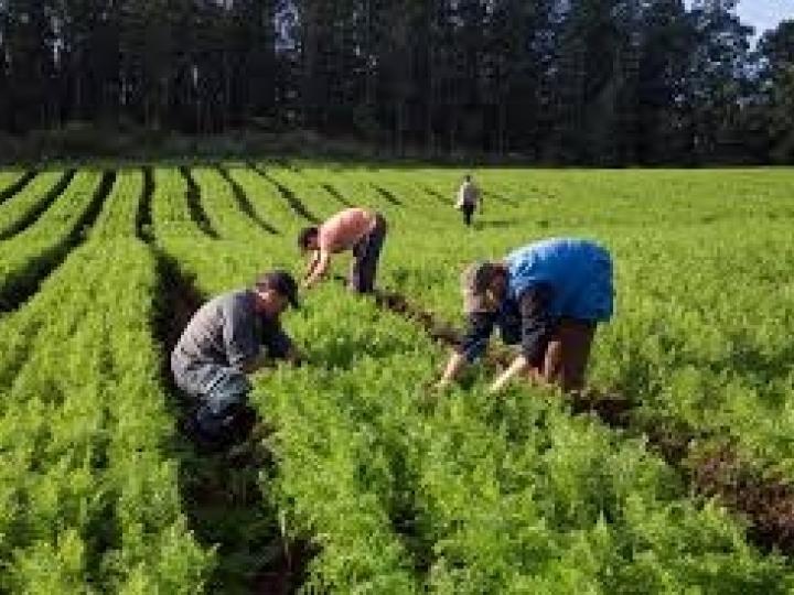 Conab garante 7 mil reais por agricultor por meio do PAA