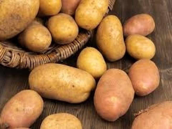 Como o fósforo foliar pode exercer um papel fundamental na batata?