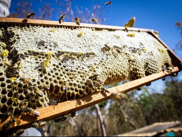 Quem compra o mel e as ceras de abelha do Brasil?