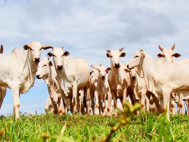 Bosch revoluciona pecuária com sistema de precisão