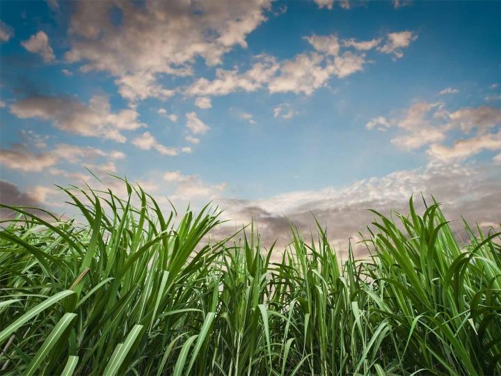 Biosev investe R$ 378 milhões na entressafra
