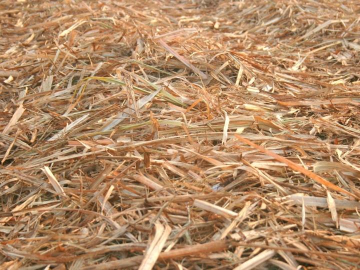 Até 70% do palhiço do canavial pode ser retirado para obtenção de benefícios energéticos, agronômicos e ambientais
