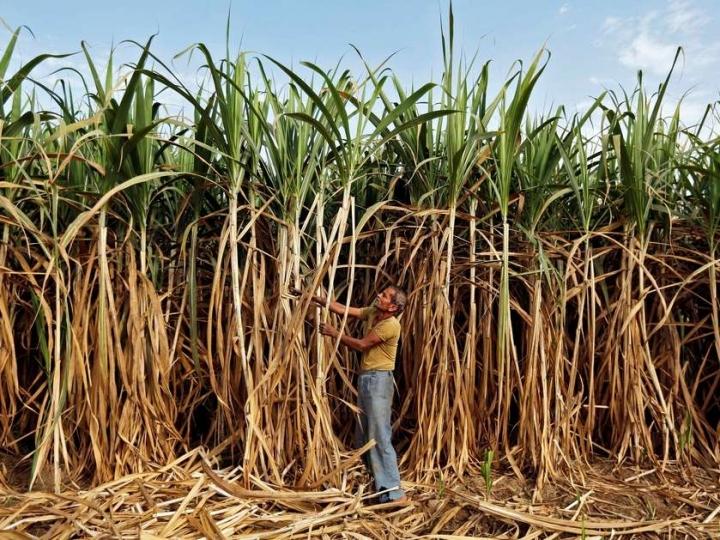 UNICA: Painel contra a Índia na OMC é passo importante para o setor