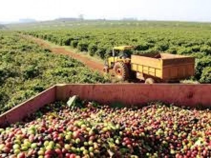 Saíram os novos preços mínimos calculados pela Conab para café, laranja e trigo