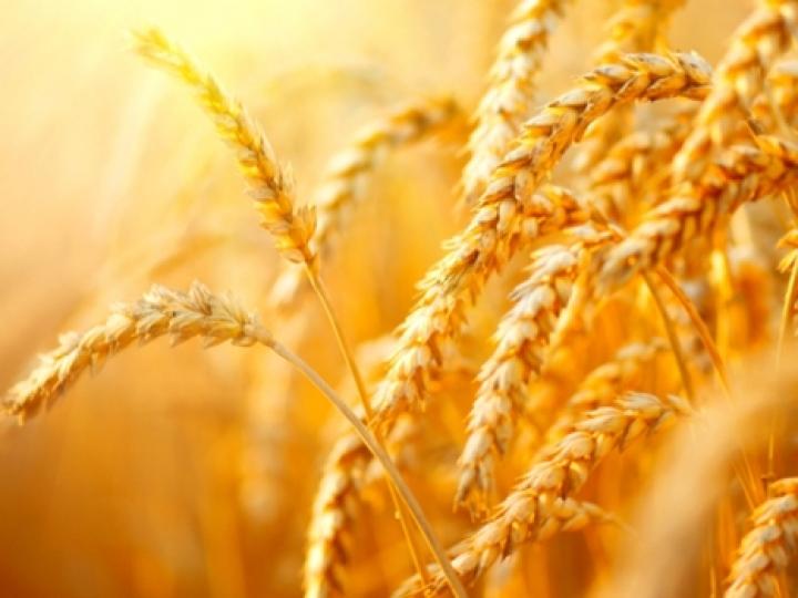 Produção brasileira de trigo sobe 3,4% em 2018