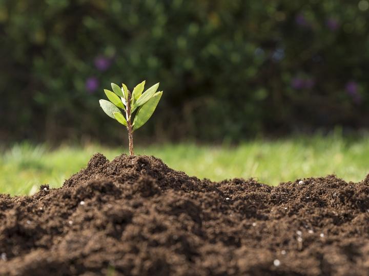 Laboratório de solos da Tereos recebe certificação do IAC
