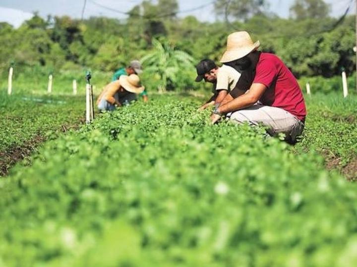 Conab começa a receber os pedidos para doação de sementes da agricultura familiar