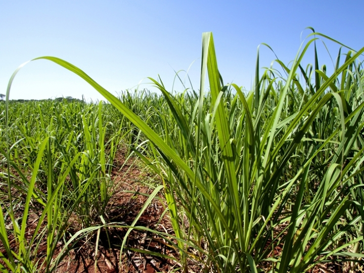 FMC auxilia produtor rural a atingir máxima produtividade na Agrishow