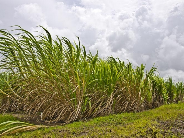Usinas indianas fecham contratos para exportar 3 mi t de açúcar