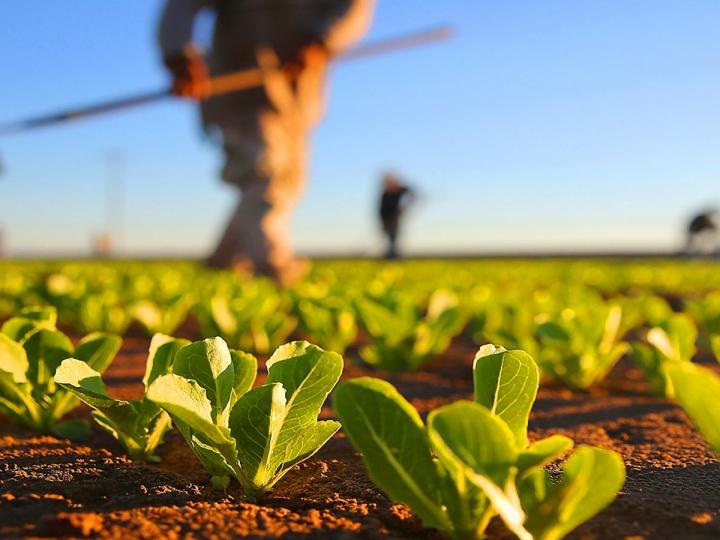 Conhecimento impacta mais a agricultura do que insumos