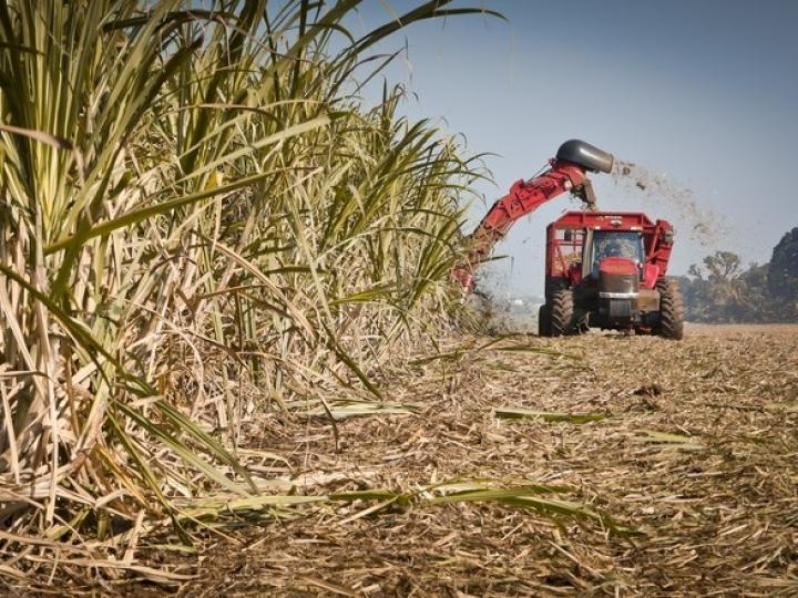 Safra ainda mais alcooleira intensifica produção e venda de etanol