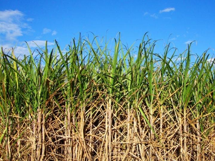 CNA propõe remuneração a produtores de cana no RenovaBio