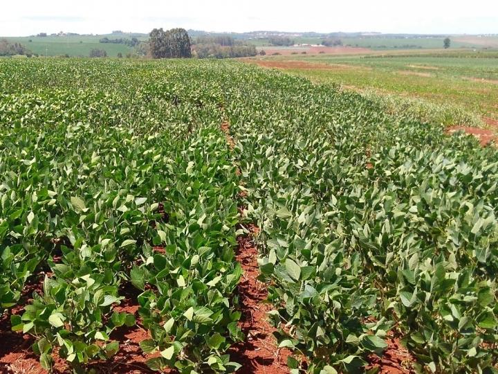 CTNBio aprova uso comercial de soja tolerante à seca com tecnologia HB4® no Brasil