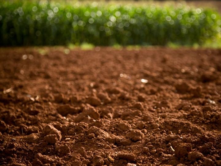 Apenas 10% dos produtores rurais brasileiros dá atenção ao manejo físico e biológico do solo