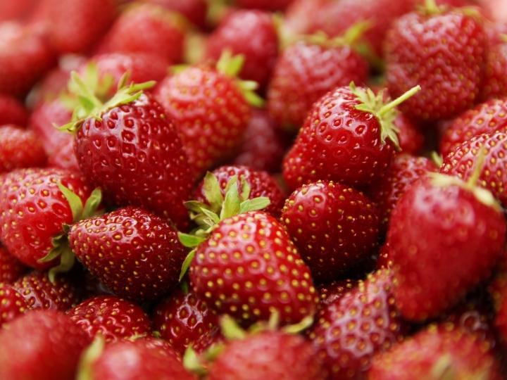 Produção integrada de morango agrega valor à fruta e reduz uso de químicos