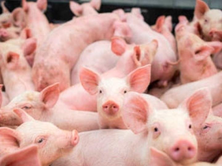 Criadores de animais e extrativistas beneficiados por programas da Conab são fiscalizados