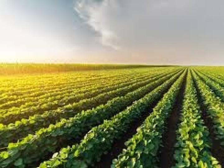 Corteva Agriscience™ conclui separação da holding DowDuPont para se tornar uma empresa totalmente focada em agricultura