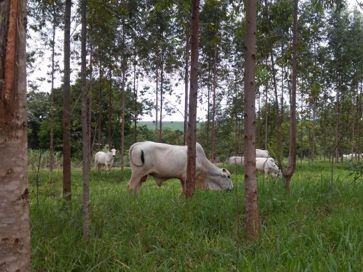 Secretaria de Agricultura e Abastecimento busca a integração da pesquisa agropecuária com a preservação ambiental