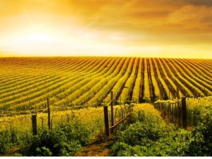 Novo Projeto de Lei pode viabilizar venda de terras a estrangeiros, diz SRB