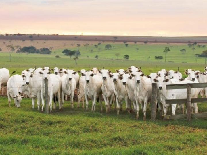 Pasto degradado leva à perda de fazendas