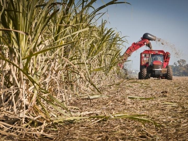 Biosev encerra safra 18/19 com alta de 8% no EBITDA ajustado unitário