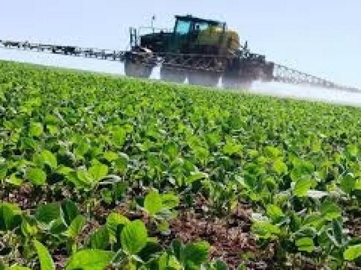 DataSafra permite acompanhar a evolução das safras de soja e milho safrinha em tempo real