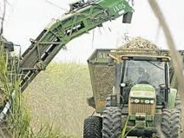 Bunge Açúcar & Bioenergia registra recordes de moagem