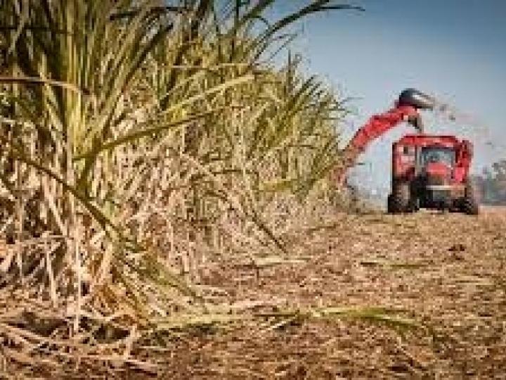 Com quase 40% da safra colhida, produção de açúcar apresenta redução de 900 mil toneladas