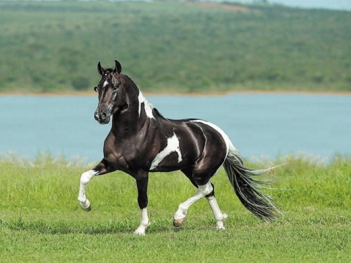 Em constante crescimento, mercado de equinos movimenta R$ 16,5 bi ao ano