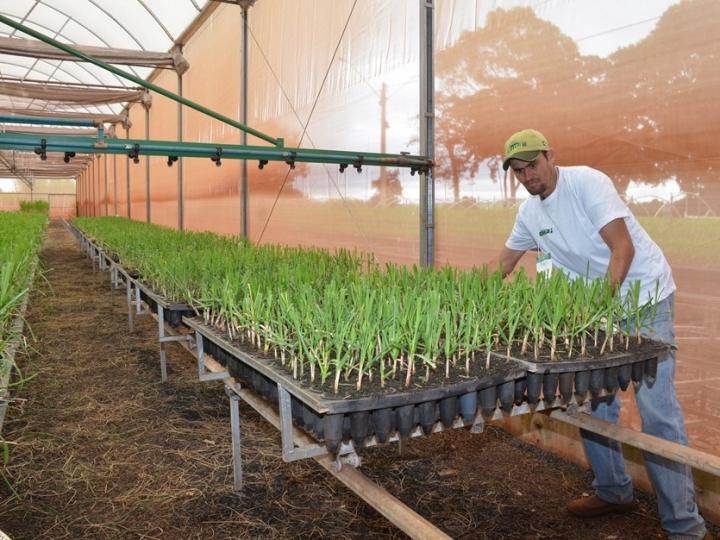 CTC lança Desafio para disseminar melhores práticas no plantio da cana