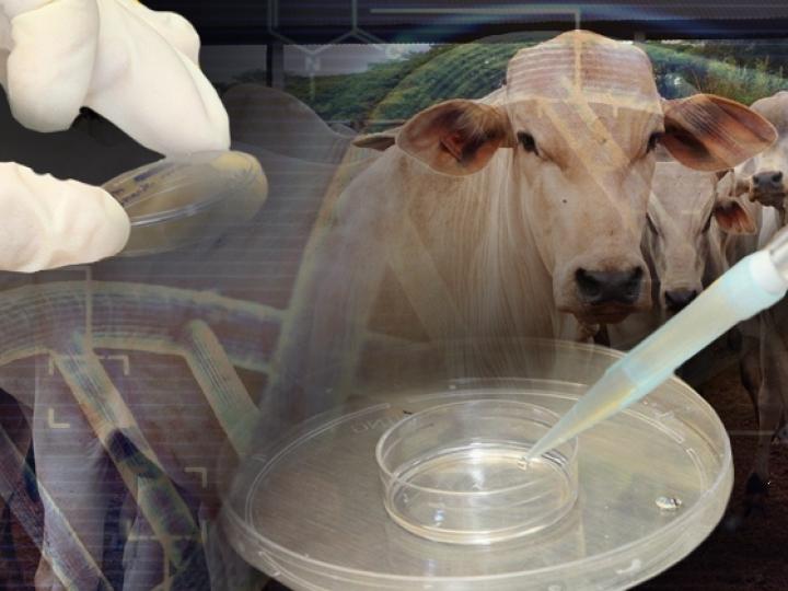 Tecnologia de transferência de embriões