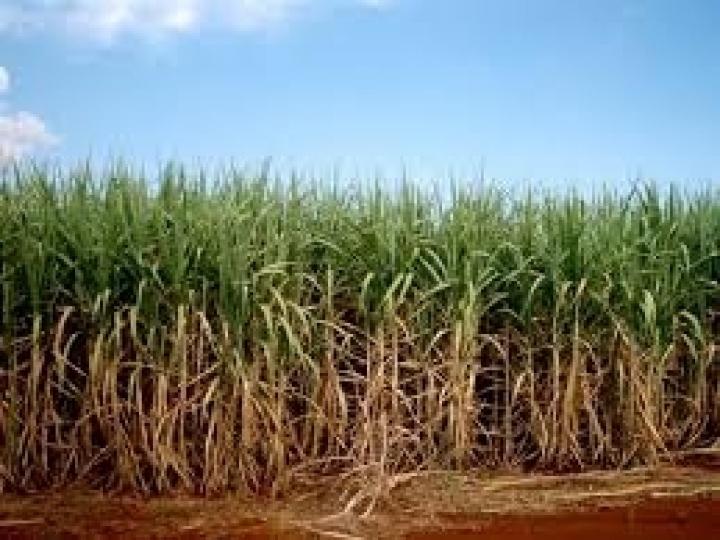 Coaf fecha parceria com multinacional para irrigação de canaviais no NE