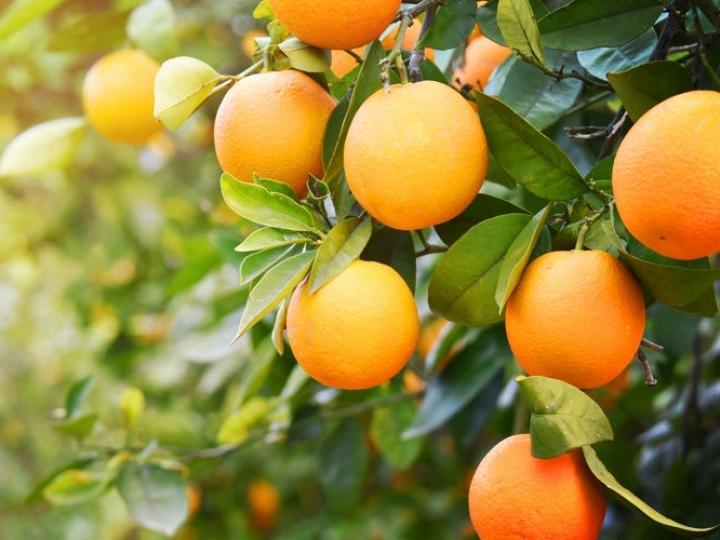 Brasil ganha Unidade Mista de Pesquisa e Transferência de Tecnologia em citros