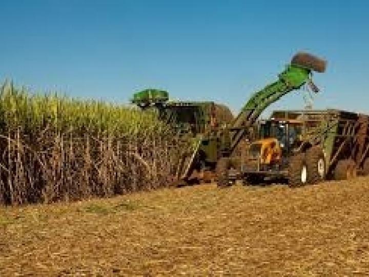 Moagem avança e produção de açúcar diminui