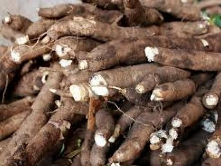 IBRAF oferece capacitação em pós-colheita da mandioca para jovens africanos