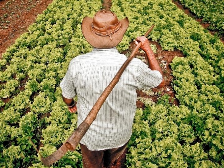 Governo publica produtos da agricultura familiar com desconto em agosto