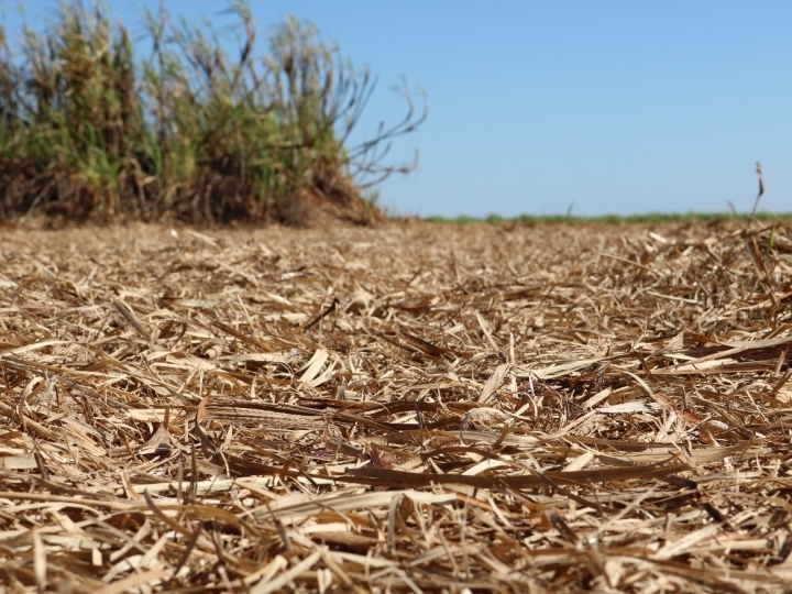 A remoção da palha de cana-de-açúcar pode dobrar a demanda de fertilizantes
