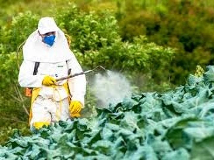 SRB contesta 'Zorra Total' sobre defensivos agrícolas no Brasil