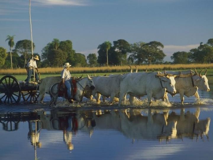 Tecnologia para medir o grau de sustentabilidade das fazendas do Pantanal