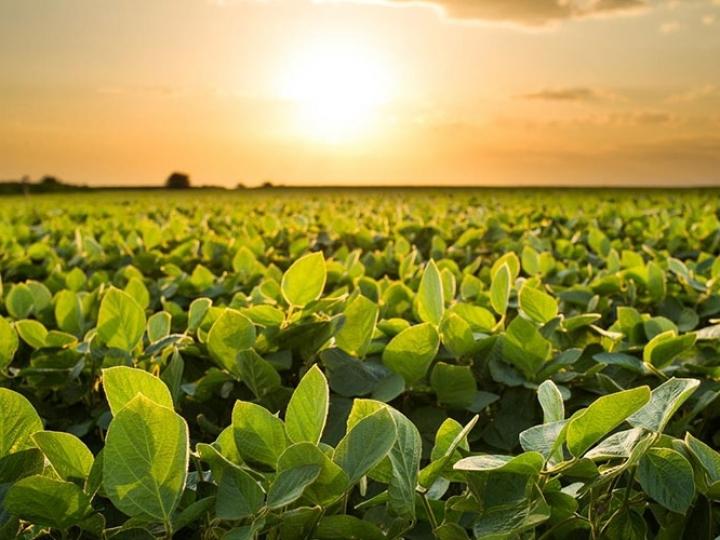 Pesquisadoras da Fundação MT alertam sobre manejo de doenças para soja