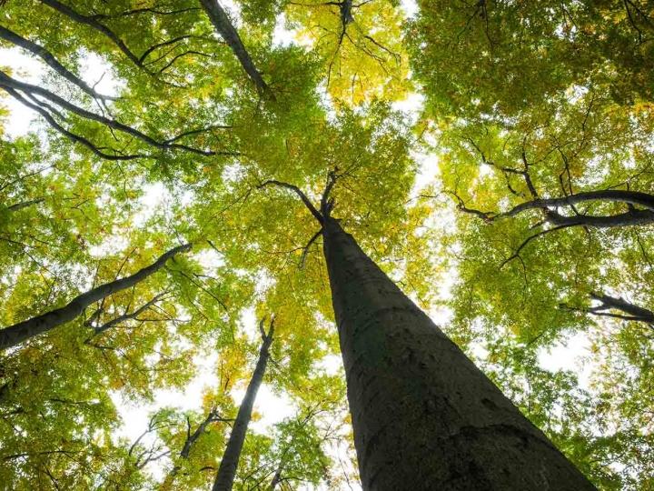 Florestas Plantadas geram estoque de 4,2 bilhões de gás carbônico equivalente