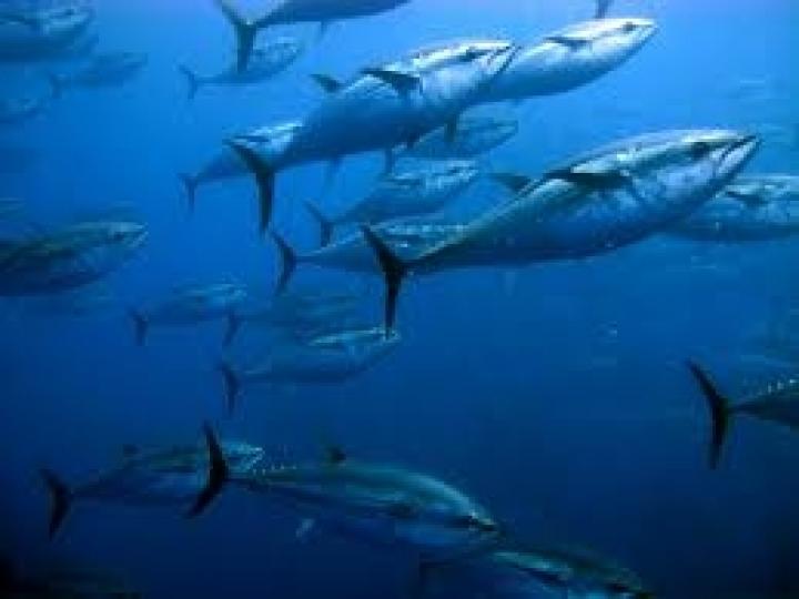 Norma para portos interessados em atuns