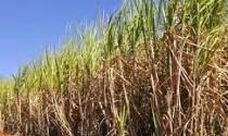 Produção de etanol por tonelada de cana bate recorde histórico no período de safra