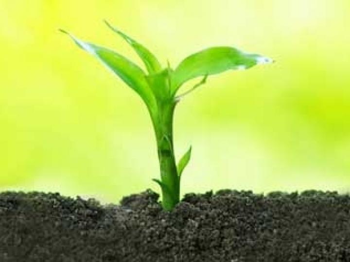 Fertilizantes orgânicos compostos no aumento da produtividade do agro brasileiro