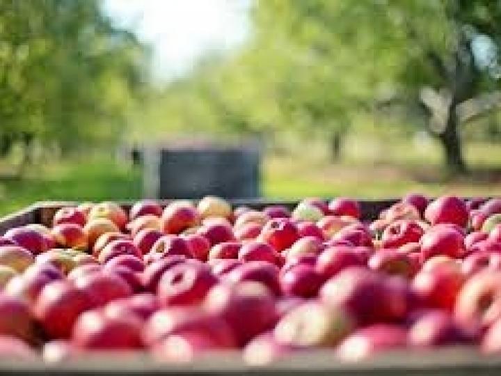 Dez defensivos agrícolas biológicos e orgânicos têm registro publicado